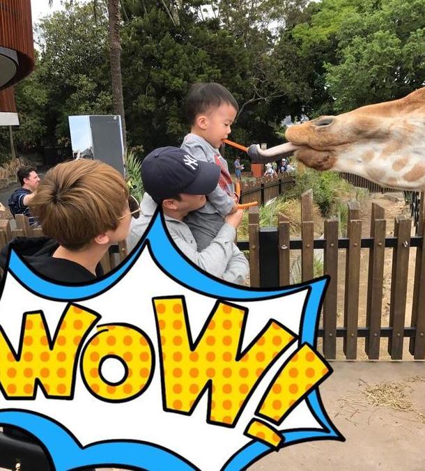 吴京一家三口游动物园 儿子喂长颈鹿画面喜感